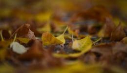 Есен е, а како да е лето (низ фотообјективот на Ивона Кочов)
