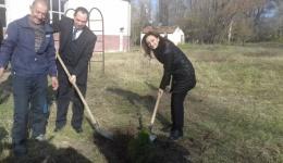 Првата дама засади дрвце во  дворот на училиштето во Бач