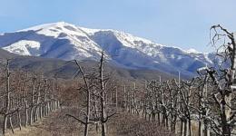 Владата префрли 80 милиони денари за обештетување на преспанските овоштари