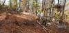 Акции на шумската полиција против дрвокрадците