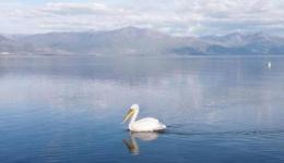 """Репортажа на """"Велт"""" за Преспанско Езеро: Пеликаните живеат на крајот од улицата"""